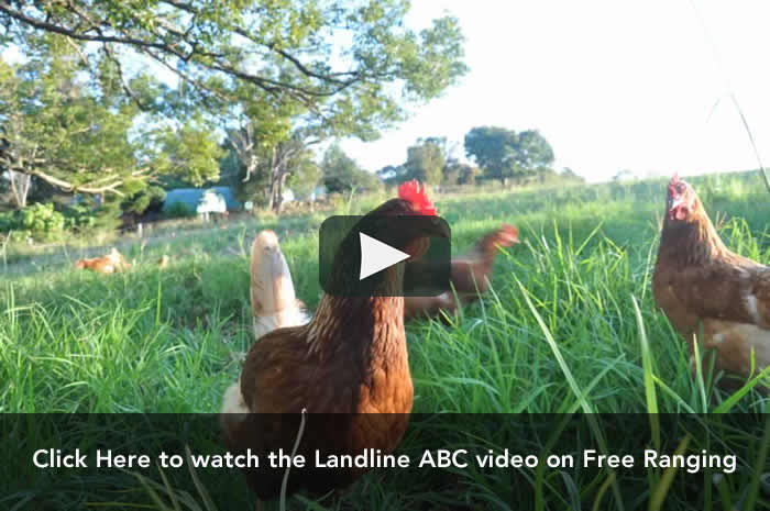 free-ranging-ABC